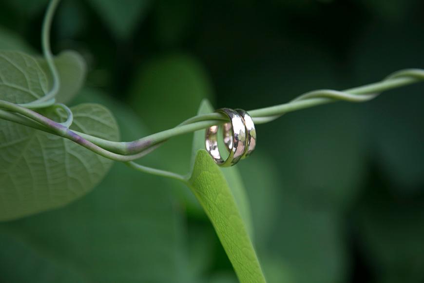 eheringe auf einer pflanze